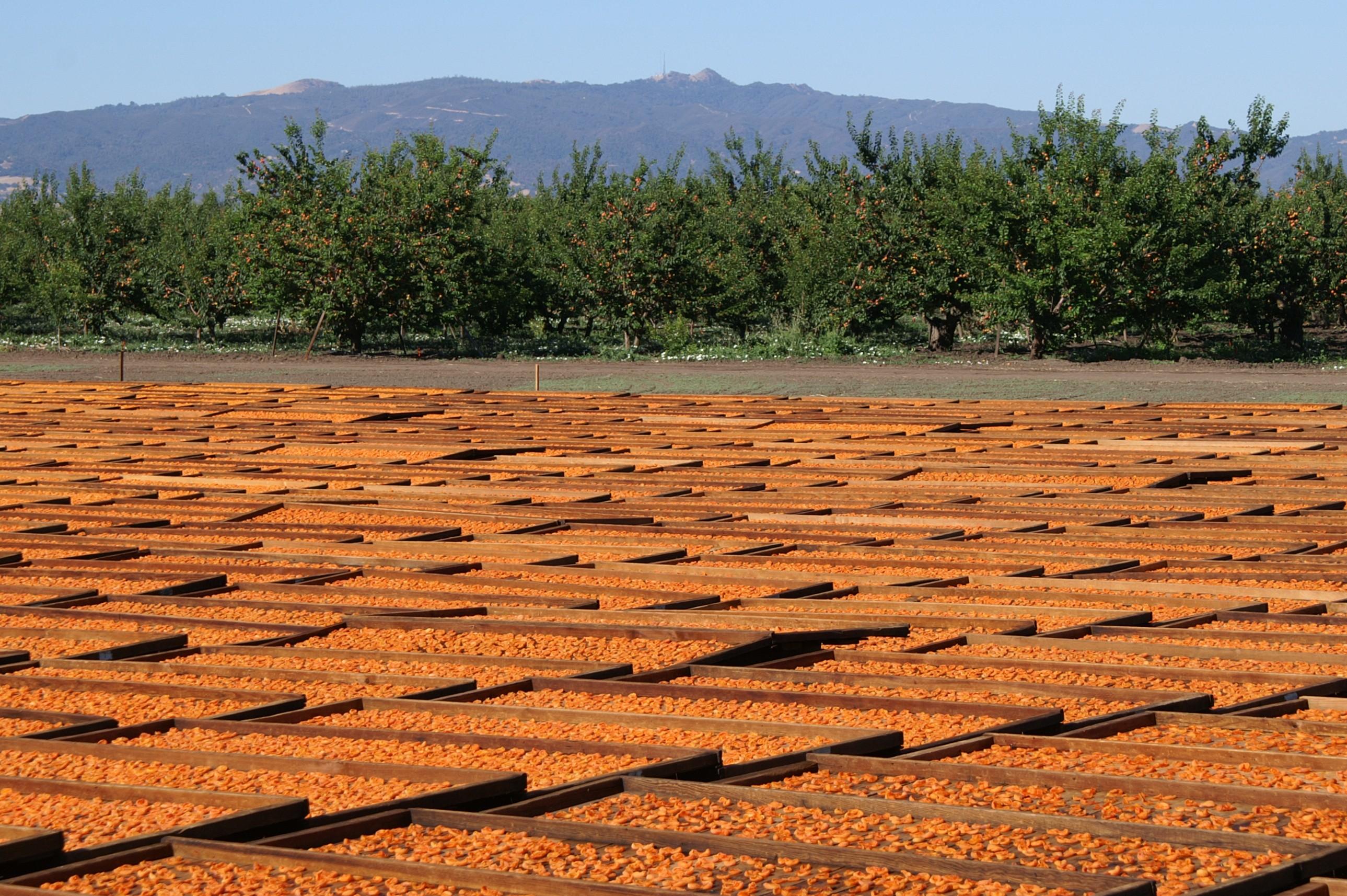 dry-yard-orchard-fremont-peak.jpg
